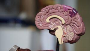 Hersenen krimpen door slecht slapen